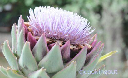fleur d'artichaut violette pour un beau décor