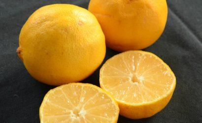 recette d'île flottante avec des citrons doux d'Iran