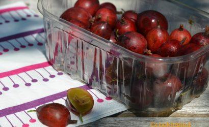 Tartare de St jaques, yuzu, bourrache et groseilles à maquereaux rouges
