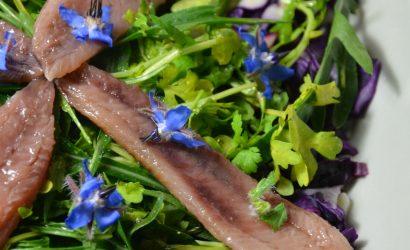 Salade de chou rouge, cresson des jardins et sardines fumées