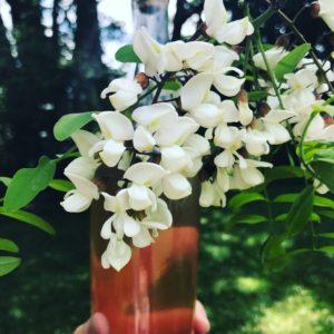 sirop en bouteille et fleurs d'acacia