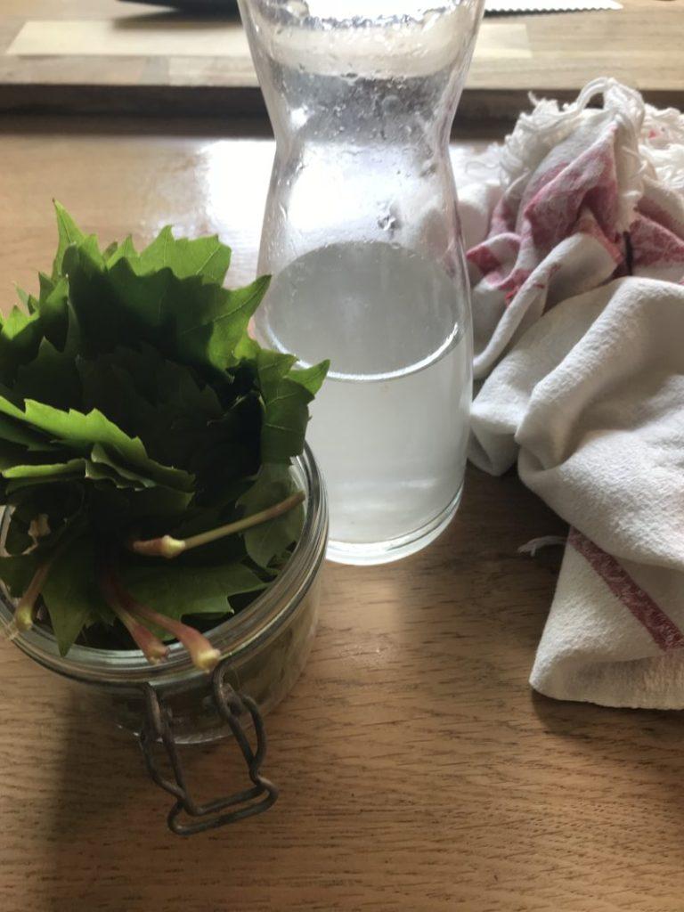 feuilles de vignes à faire surir avec de l' eau salée