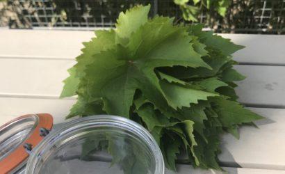 préparation pour faire surir des feuilles de vignes