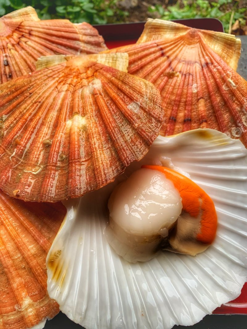 Coquilles St jacques brutes