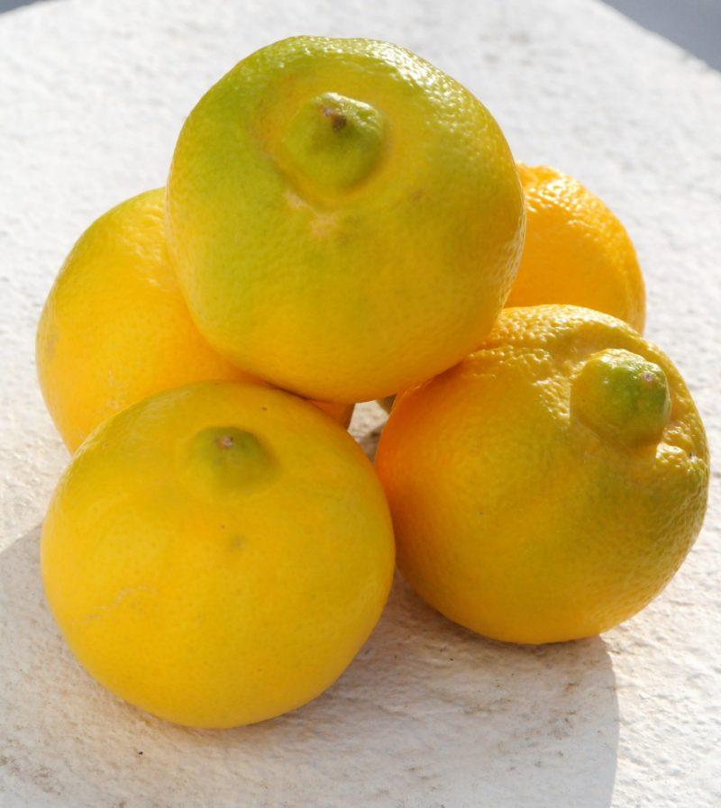 Citrons Bergamote à découvrir