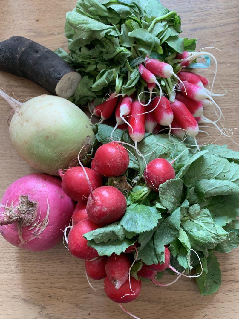 Sélection des radis à fermenter