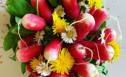 radis fleuris avec des fleurs de printemps pâquerettes et pissenlits