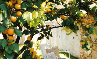 Abricotier de Provence - © Chantal Lang