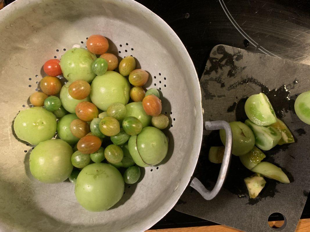 récolte en novembre de tomates vertes de mon potager urbain