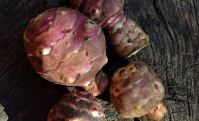 topinambours au gout d'artichauts